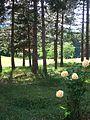 Шума во Крушево , Forest in Krushevo.JPG