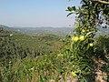 التفاح في قرية الوادي = جقورجق - panoramio.jpg
