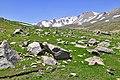 چشم اندازی در دامنه های سبلانA view of Sabalan mountain - panoramio (1).jpg