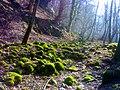 گل سنگ در جاده خوش ییلاق - panoramio.jpg