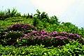 であいの館蒲刈の急斜面 - panoramio.jpg