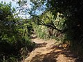 小北岭登山道 - Xiaobeiing Mountain Trail - 2014.07 - panoramio (2).jpg