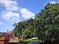 左側的代天府聖明宮入口與右側山上的千年神豬樹公.jpg