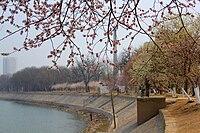 天津市桃花堤在哪_天津桃花园 - 维基百科,自由的百科全书