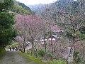碧絡角咖啡民宿 Biluojiao Coffee B^B - panoramio.jpg