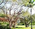 -MIAMI-CORAL GABLES - panoramio.jpg