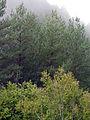 051 Bosc a la serra Pigota, des del castell de Lillet.jpg