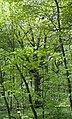 09 2012 Bystrice-pod-Hostynem pamatny-strom Dub-pod-Dubickem.jpg