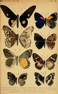 1890DtEnt Z. IrisPlate3.jpg