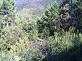 19017 Riomaggiore, Province of La Spezia, Italy - panoramio (2).jpg
