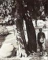 1907年9月11日岱庙华斌庭院内有几百年历史的古紫藤.jpg
