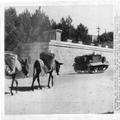 1945 - ירושלים - חמורים מתקרבים לנשא רובה ברן ברקע בניין הספרייה הלאומית.-PHL-1089269.png
