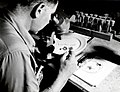 1958. John Whiteside checking budworm development. Spruce budworm control project. John Day, Oregon. (32795688120).jpg