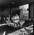 1960 Station Avicole au CNRZ-17-cliche Jean-Joseph Weber.jpg