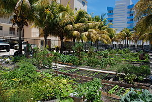 South Beach community garden, Miami, Florida