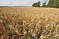 2011-07-10-parsteinsee-by-RalfR-26.jpg