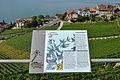 2012-08-12 10-09-34 Switzerland Canton de Vaud Rivaz.JPG