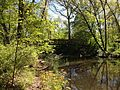 2013-05-04 15 38 54 Pedestrian bridge across Shabakunk Creek below Colonial Lake in Lawrence, New Jersey.jpg