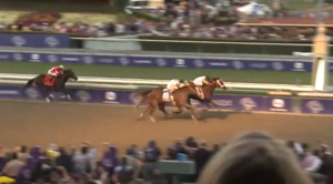 Mucho Macho Man - Mucho Macho Man (right, leading) winning the 2013 Breeders' Cup Classic