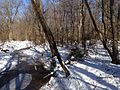 2014-01-24 11 52 03 View north along the West Branch Shabakunk Creek.JPG