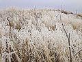 2014-12-17 13 46 11 Rime from freezing fog on cheat grass in Elko, Nevada.JPG