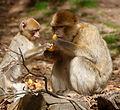 2016-04-21 14-57-49 montagne-des-singes.jpg