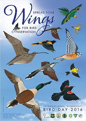 Bird Day - International Migratory Bird Day 2016 poster by Lionel Worrell