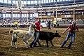 2016 Iowa State Fair (28361596143).jpg