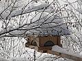 2018-01-21 (102) Parus major (great tit) on a bird table im Haltgraben, Frankenfels.jpg