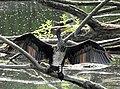2018-06-16 Aradosee Kormoran 01.jpg