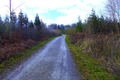 2018-12-22-December-watercolors.-Hike-to-the-Ratingen-forest. File-18.png