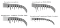 20191221 Radiodonta frontal appendage Anomalocaris.png