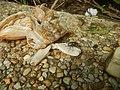 4087Ants Common houseflies foods delicacies of Bulacan 44.jpg