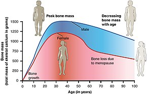How to reduce your bone weight