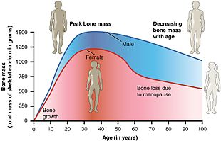 menopause - wikipedia, Skeleton