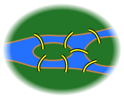 7 bridges.svg