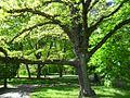 831 Magnolia Gdańsk.jpg