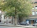 92 Lonsdale Avenue (3).JPG