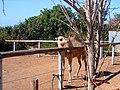 A@a Agios Georgios zoo park paphos cy. - panoramio (4).jpg