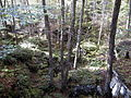 AUT 2556 ForestWander.JPG