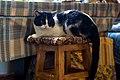 A cat in Ubezhenskaya-2015-05-30.jpg