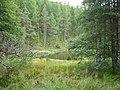 A forest lochan - geograph.org.uk - 227644.jpg