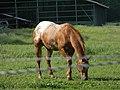 A horse - panoramio.jpg
