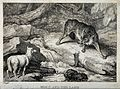 A large wolf snarling from across a stream at a bleating lam Wellcome V0021603.jpg
