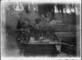 A punt laden with people and horses being winched across the Waipa River, in 1917. ATLIB 284107.png