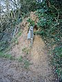 A six foot high road sign nearly buried by badgers^ - geograph.org.uk - 649254.jpg