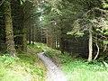 A twisting forest walk - geograph.org.uk - 558115.jpg