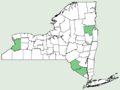 Acer × freemanii NY-dist-map.png