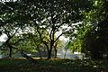 Acharya Jagadish Chandra Bose Indian Botanic Garden - Howrah 2011-01-08 9848.JPG