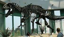 Remains of an Acrocanthosaurus.